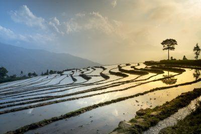 Ambiente: Vietnam